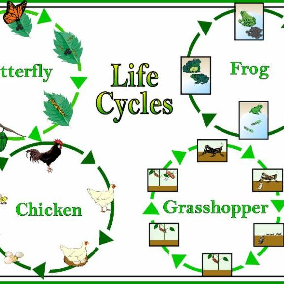 life-cycles-square